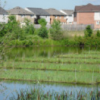 In a pond in Brampton, Ont., are half a dozen oblong islands that weren't there last summer.